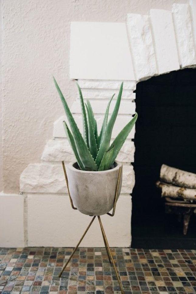 aloe-vera-plant-clean-air.jpg