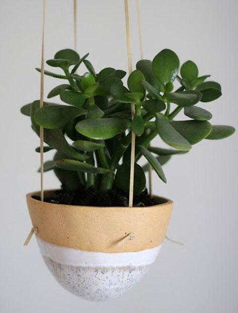 jade_plant_list